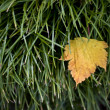 Autumn leaf - Photo