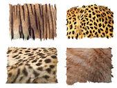 Feline animals fur patterns — Stock Vector