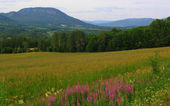 Beautiful Norway nature — Stock Photo