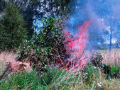 Fire in woods — Stock Photo