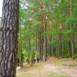 The path in the woods — Stock Photo #10526495