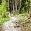 The path in the woods — Stock Photo
