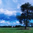 Stock Photo: Lonely tree on green field