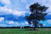 Samotne drzewo na boisko zielone — Zdjęcie stockowe