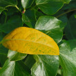 Leaf at fall — Stock Photo #8778065