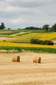 Round straw bales in harvested fields — ストック写真