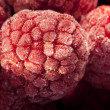 Frozen raspberries — Stock Photo