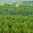 Aerial view of a green mountain forest - Foto de Stock  