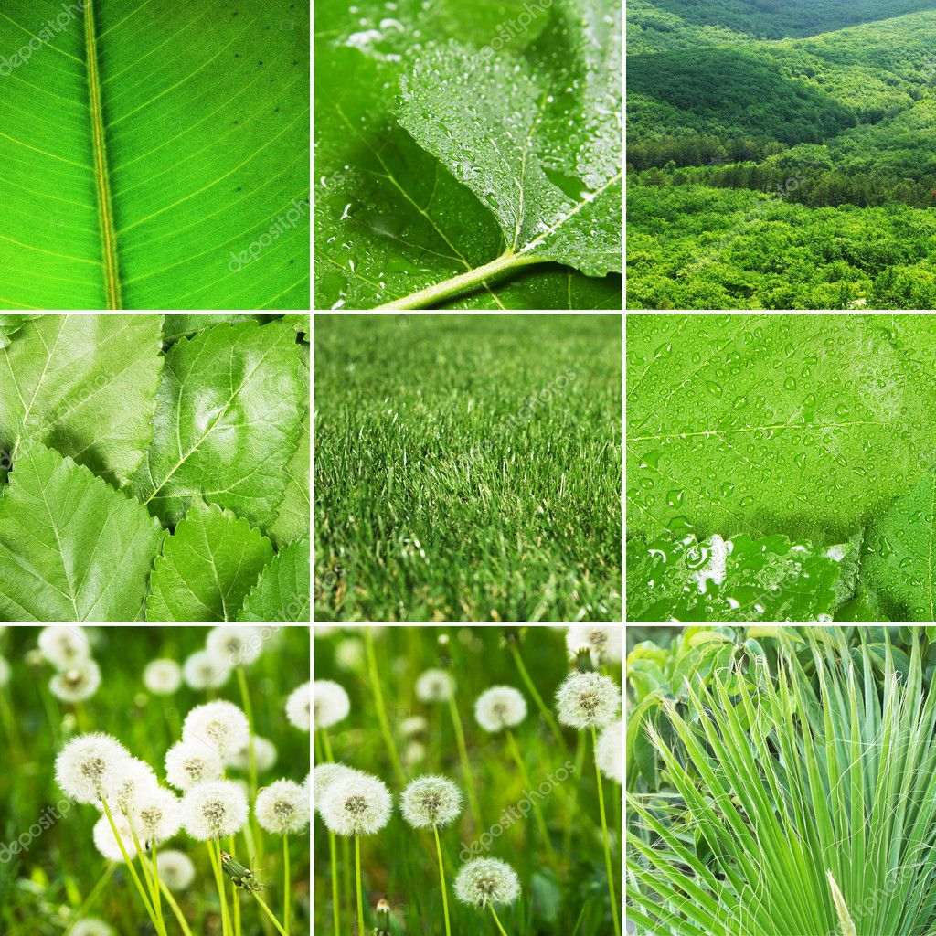 Abstract collage of nature photos, green tones — Stock Photo #10575826