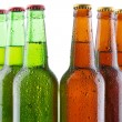 Beer bottles isolated on white background — Stock Photo
