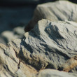 Stock Photo: River rock