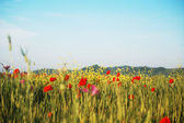Summer wildflowers meadow — Stock Photo