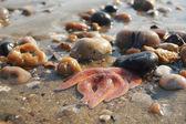 海洋之星 — 图库照片