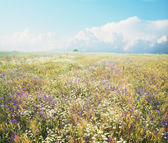 Summer field — Stock Photo