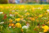 Fallen autumn leaves — Stock Photo