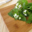 Stock Photo: Fresh garlic mustard