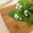 Fresh garlic mustard - Foto Stock