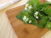 Fresh garlic mustard — Stockfoto