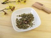 Witch Hazel leaves, Hamamelis folium — Stock Photo