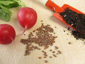 Radish seeds — Stock Photo