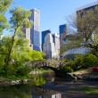 Central Park — Stock Photo #10619327