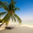 Deck chair under a palm-tree on a tropical beach — Stock Photo #8635707