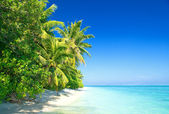 Tropical Beach with Coconut Palm Trees — 图库照片