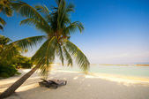 Deck chair under a palm-tree on a tropical beach — 图库照片