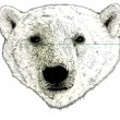 Head of a Polar Bear Illustration on White — Stockfoto