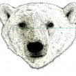 Head of a Polar Bear Illustration on White — Stock Photo