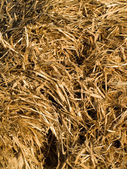 Wet Hay Straw Background Texture — Stock Photo