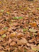 Jesień wzór złoty liść brązowy — Zdjęcie stockowe