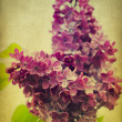 Grunge lilac flower — Stock Photo