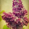 Grunge lilac flower — Stock Photo