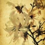 Grunge magnolia flowers — Stock Photo