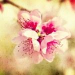 Grunge peach flowers — Stock Photo