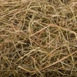 Hay, background - Stock Photo
