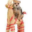 Riding Christmas dog on Santa's raindeer - Stock Photo