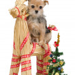 Dog on Santa's straw raindeer — Stock Photo