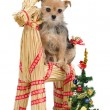 Stock Photo: Dog on Santa's straw raindeer