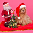 Santa Claus dog and Snow Maiden with New Year Tree — Stock Photo