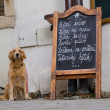 Restaurant menu board and a hungry dog — Stock Photo