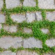Pavement - old stones between grass — Stock Photo