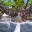 Huge tree in Wat Phra Yai temple, Koh Samui, Thailand — Stock Photo