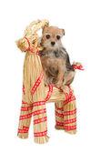 Riding Christmas dog on Santa's raindeer — Stock Photo