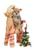 Dog on Santa's straw raindeer — Stock Photo
