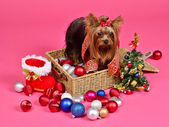 Christmas puppy with balls, new year tree and gift boot — Stock Photo