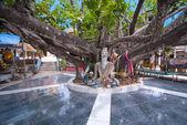 Huge tree in Wat Phra Yai temple, Koh Samui, Thailand — Stock Photo
