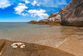 Seashells on exotic beach — Stock Photo