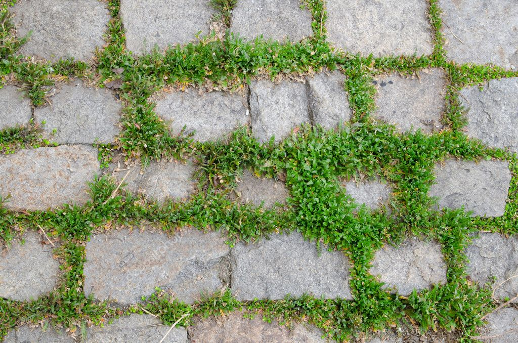 Background of street stones between grass — Stock Photo #8289842